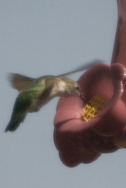 Another or same hummingbird