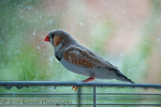 Small zebra finch on colorful background