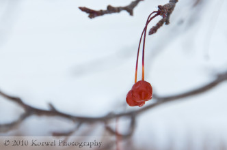 Two red rowan berries hanging from the branch