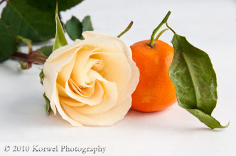 Yellow rose and orange with a green leaf still life