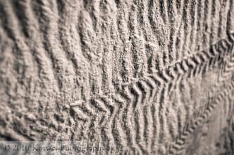 Fossil plant impression texture