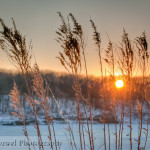 Sunset grass on Coralville Lake