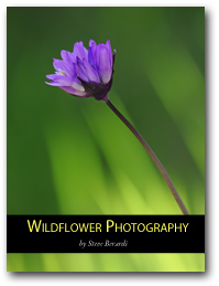 Cover wildflowers