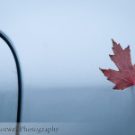 #Macro Monday- lone red leaf
