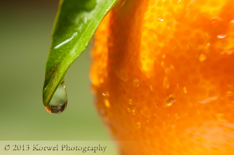 Water drop on an orange leaf