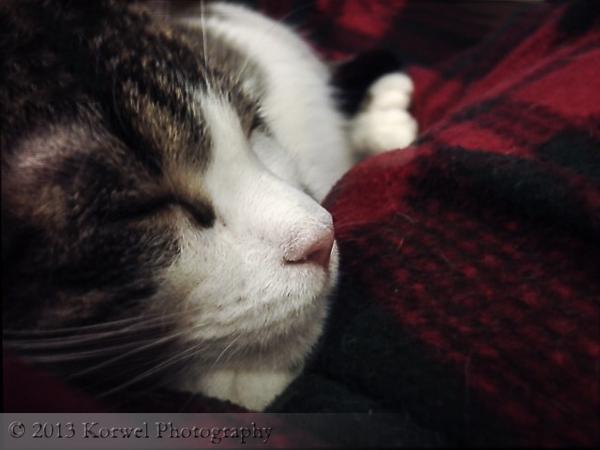 Torie, sleeping