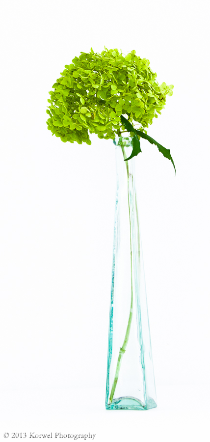 Dried green hortensia (hydrangea) flowers in tall glass vase