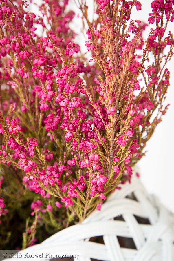 Pink heather for autumn decoration