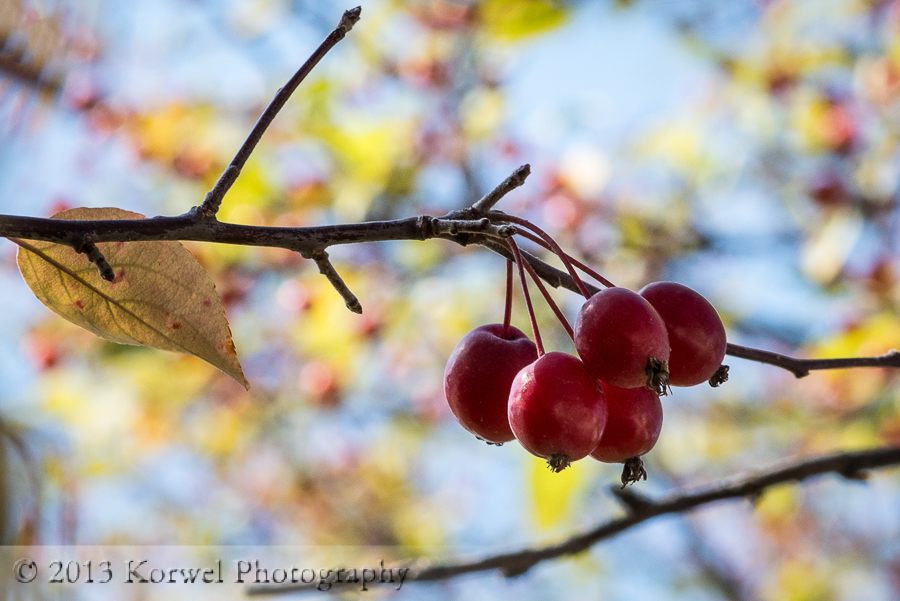 Red berries in colorful autumn