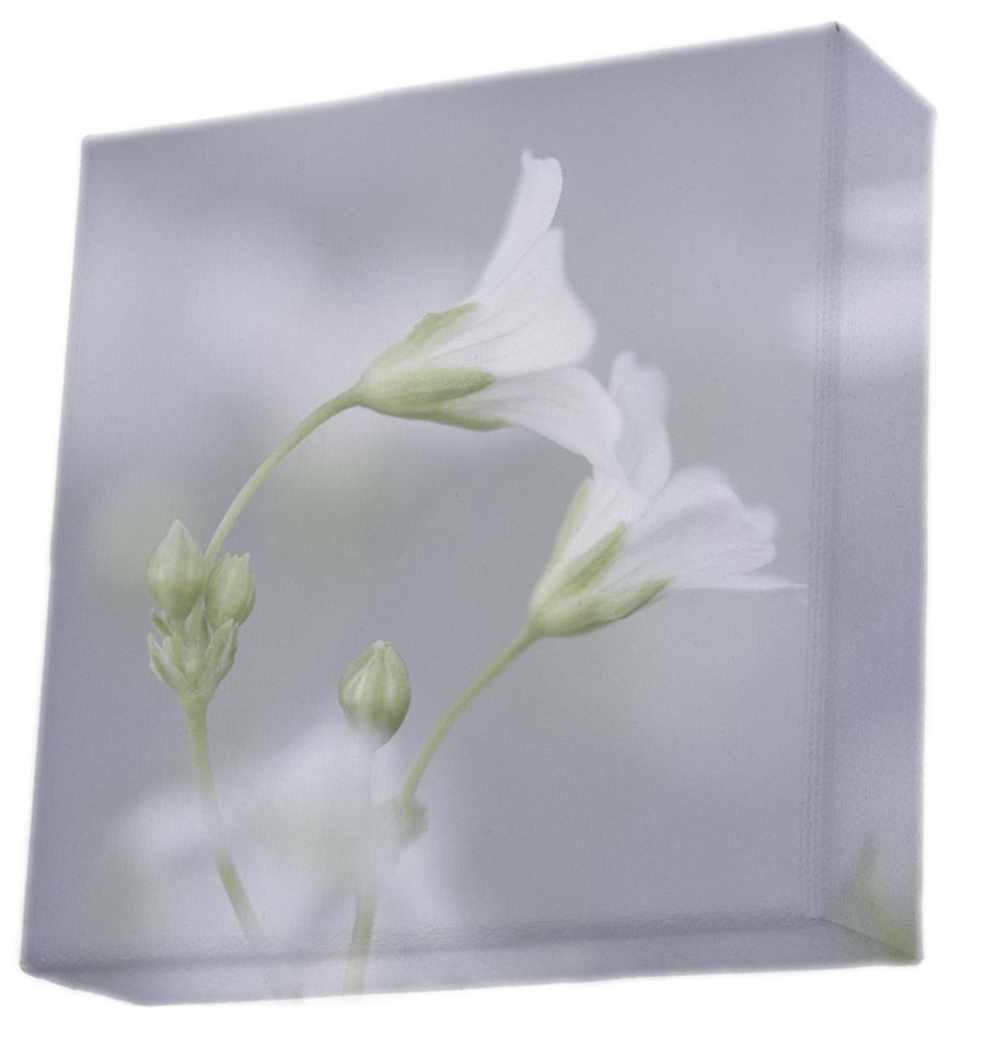 canvas-delicate-flowers