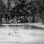 Ducks, fog and snow