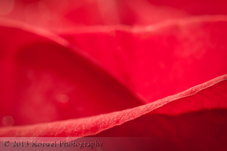 Red tulip petal abstract