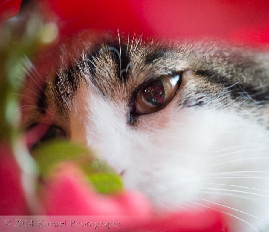 peeking through color