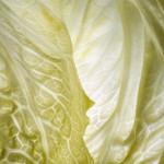 Study of a lettuce leaf