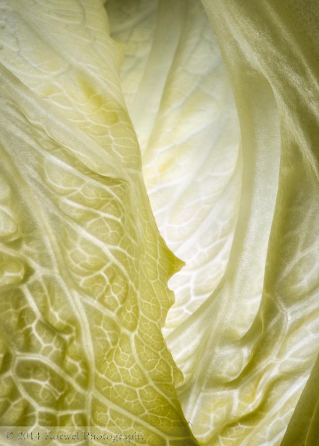 Greens of lettuce leaf