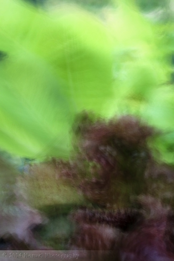 Salad abstract 2