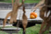 pumpkin-invitation